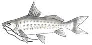O Jundiá – Peixe que deu origem ao nome da Cidade