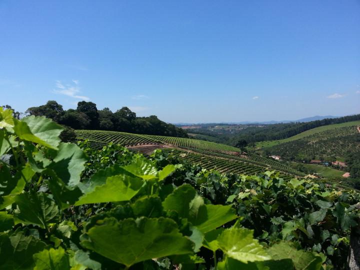 Agricultura impulsiona também o turismo rural na cidade