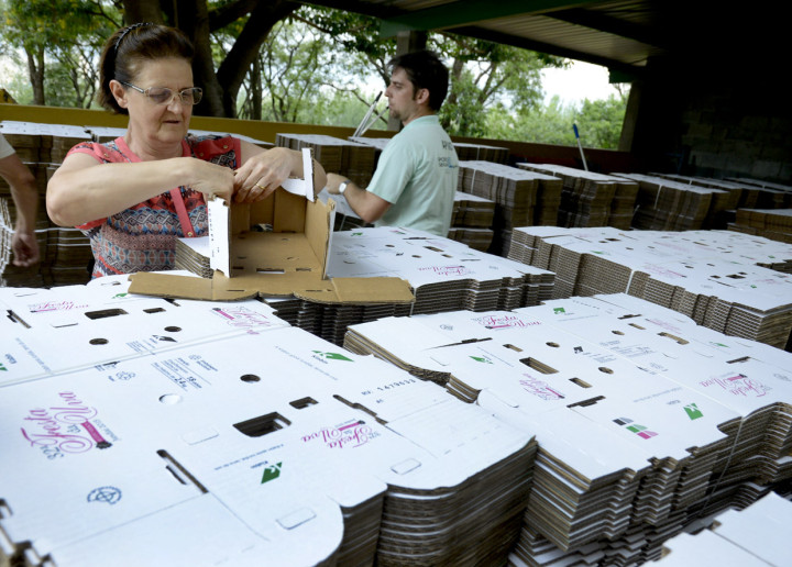 Agricultora testa a montagem da caixa exclusiva das uvas