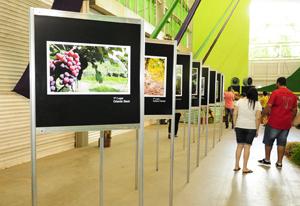 As imagens vencedoras e que ficaram expostas durante todos os dias da festa