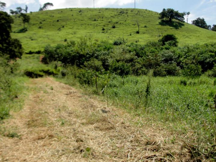 Parte da antiga área de pastagem está voltando a ter floresta