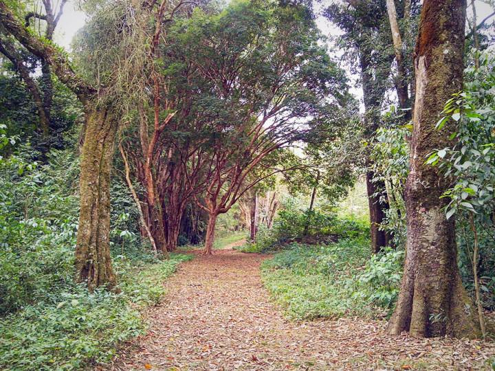 Serra do Japi mais protegida: 32 anos de tombamento