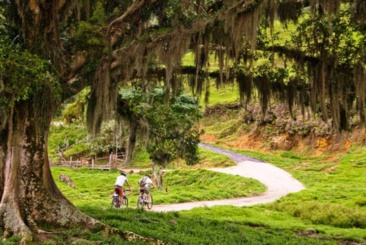 O cicloturismo alia meio ambiente e valorização de trajetos rurais
