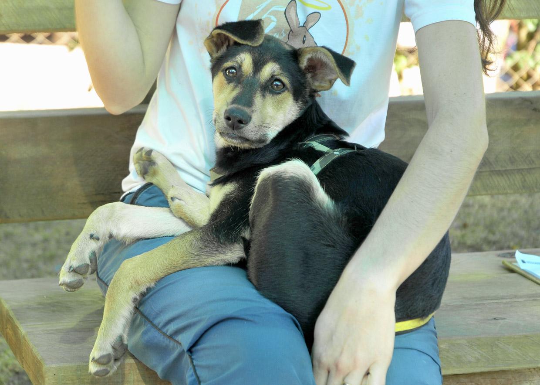 Cobema levará animais adultos para adoção no Estimacão 2015