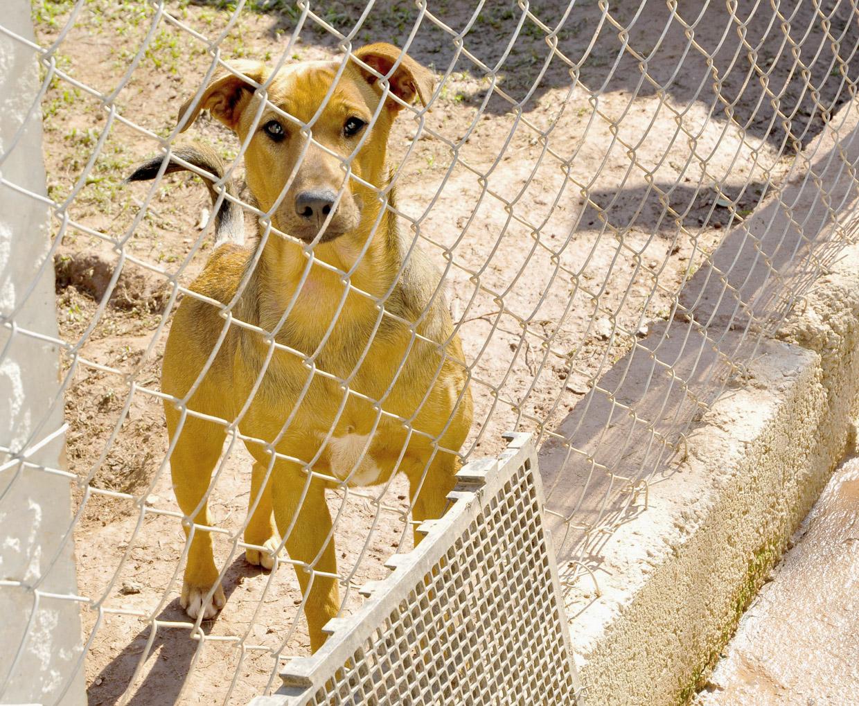 Cães saudáveis e cuidados pela Cobema estarão no evento