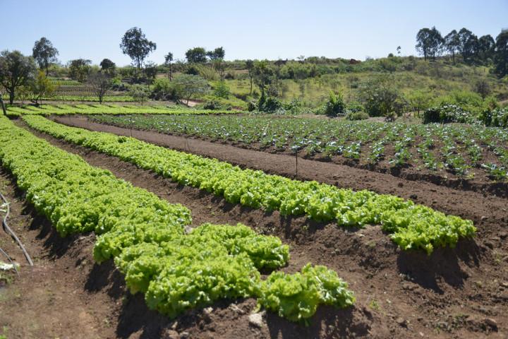 Verduras e legumes fresquinhos vêm da horta da Unidam