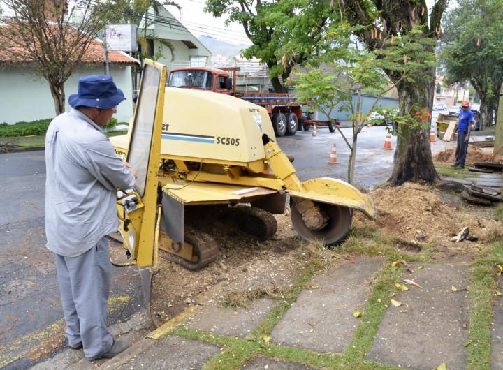Equipamento está em operação para remover raízes e troncos
