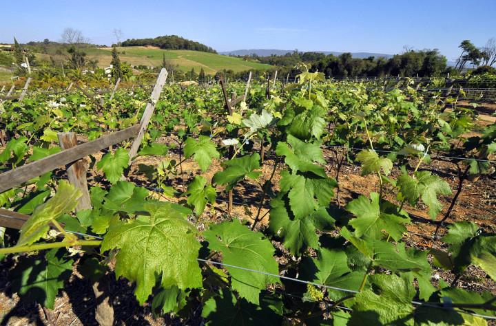 O Cadastro Ambiental Rural orienta produtores e pode gerar benefícios