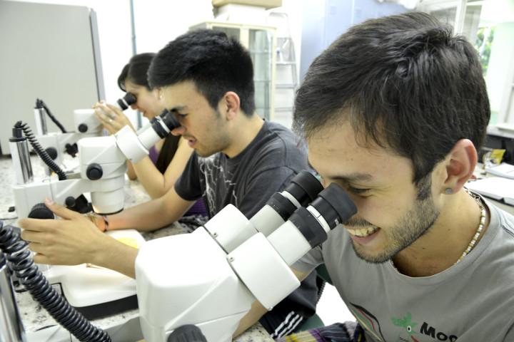 Estudantes de diversos países aprendem biologia na natureza do Japi