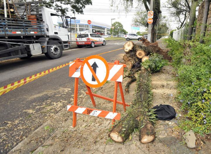 Trabalho de remoção de árvores entrou pela manha desta quarta-feira