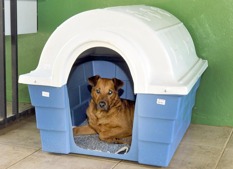 O cachorro chamado Inácio aprovou as novas casinhas