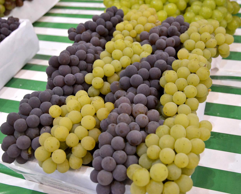 A maior festa da cidade homenageia a uva Niagara Rosada, surgida em Jundiaí