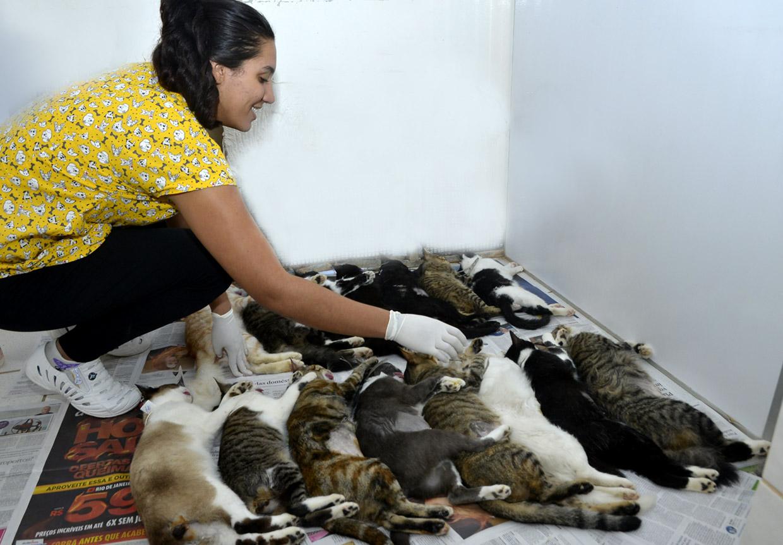 Animais descansam depois de cirurgias na Cobema