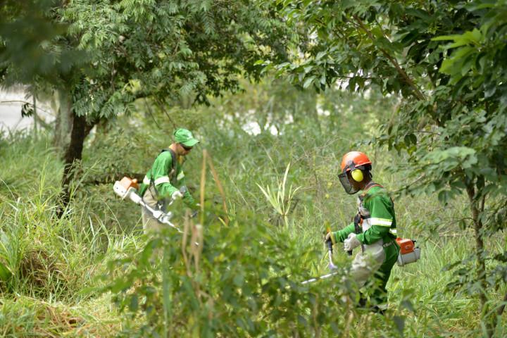 Prefeitura intensificou corte de mato e reduziu prazo para terrenos com foco de dengue