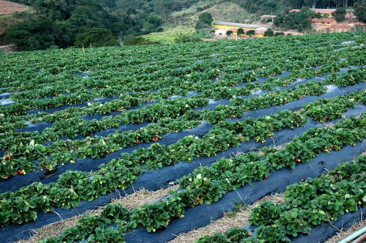 Evento reúne fornecedores de horticultura e fruticultura