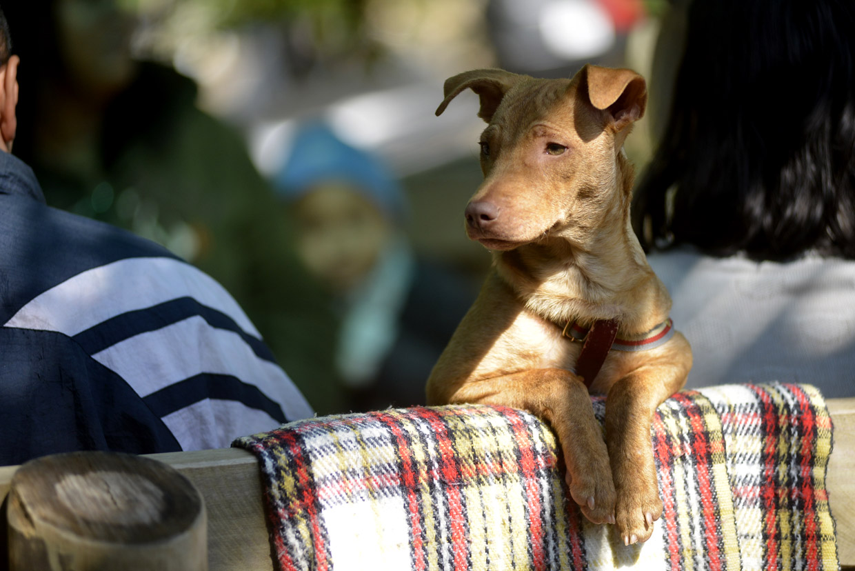 Animais terão campanha contra os maus tratos e abandono