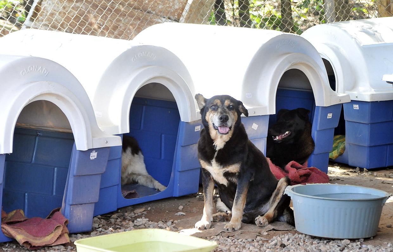 Cães tratados pela Cobema vão estar para adoção consciente no evento