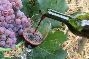Uva e vinho são símbolos do turismo rural