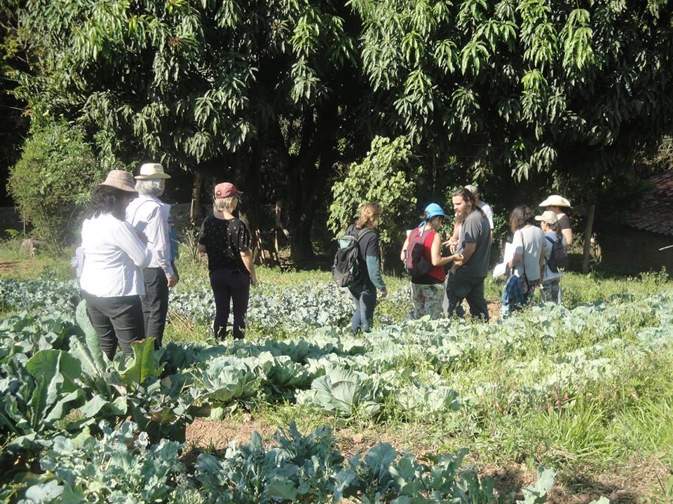 Cena de visita técnica a cultivo do grupo nessa segunda-feira (10)