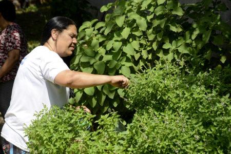 Mulher colhendo folhas