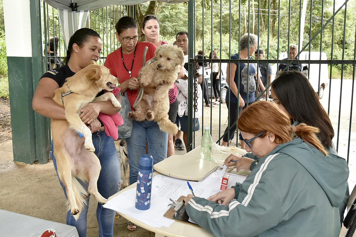 Duas pessoas seguram cães enquanto são atendidos