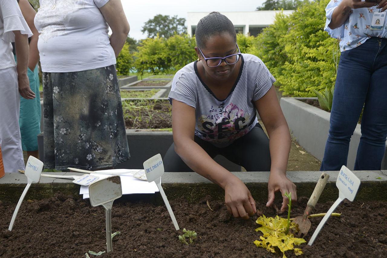 Mulher cultiva planta em canteiro