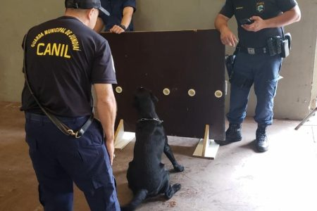 Guardas durante trabalho com cão