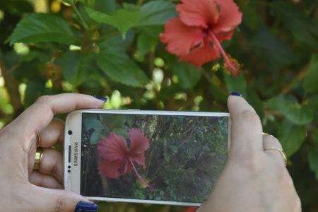 Celular fotografando uma flor