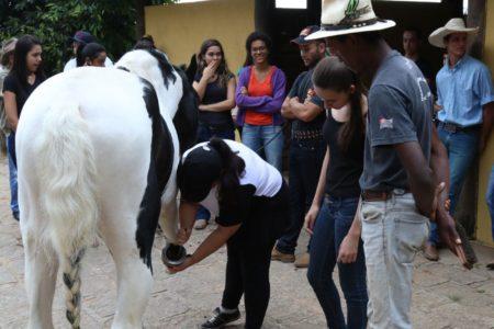 Mulher faz casqueamento em pata de cavalo enquanto outras pessoas assistem