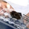 Morcego recolhido, em laboratório