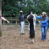Mulher manuseia cavalo enquanto outras pessoas assistem