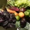 Ramalhete de folhas de verduras e legumes: manjericão roxo, alface, beterraba, couve, maça e cenoura