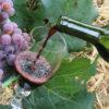 Garrafa de vinho sendo servida em taça com cacho de uva ao lado