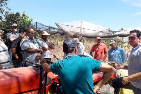 Agricultores conversam em roda com plantação ao fundo
