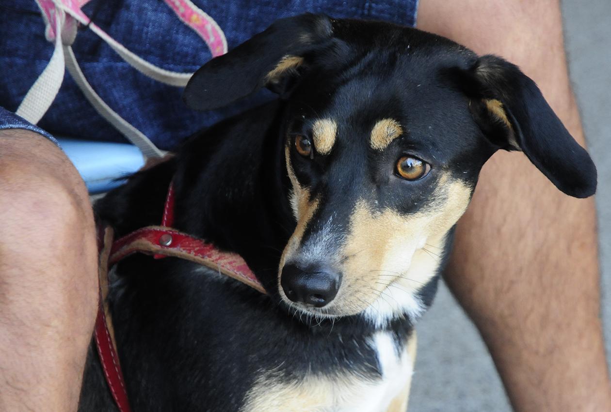 Cachorro aguarda para castração em mutirão