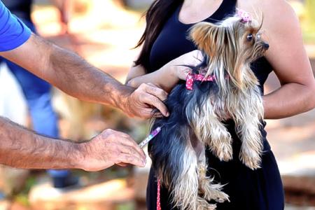 Cão recebe vacina em colo