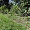 Área verde cercada