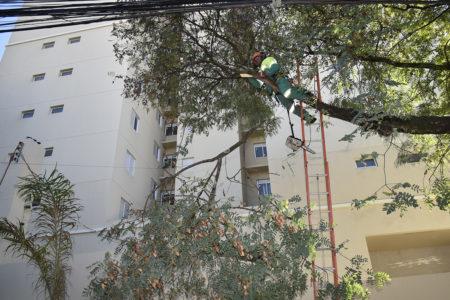 Poda de árvores perto da fiação elétrica é muito perigoso e exige capacitação