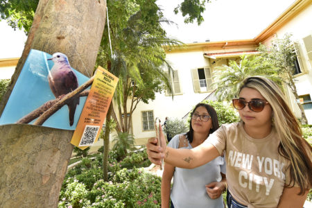 Duas mulheres olhando para placa com foto de pássaro, com uma delas apontando o celular