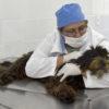 Em janeiro, cães e gatos poderão ser castrados no Novo Horizonte e no Santa Gertrudes