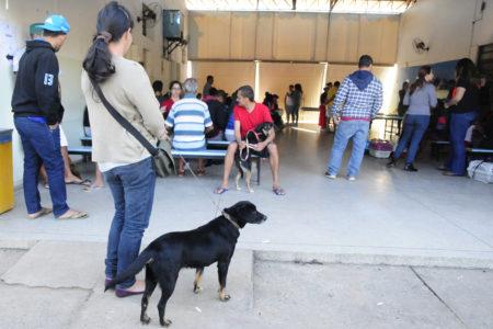 DEBEA fez 2.883 cirurgias de cães e gatos em 2019, contra 1.500 em 2016
