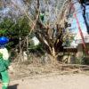 Rua Oswaldo Aranha, na Vila Lacerda, teve remoção de árvore nesta quarta-feira (15)