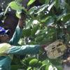 Poda de árvore foi realizada na Av. Samuel Martins e em vários bairros de Jundiaí