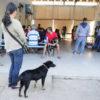 Debea abre inscrições para castrações de cães e gatos no rio Acima no próximo dia 2