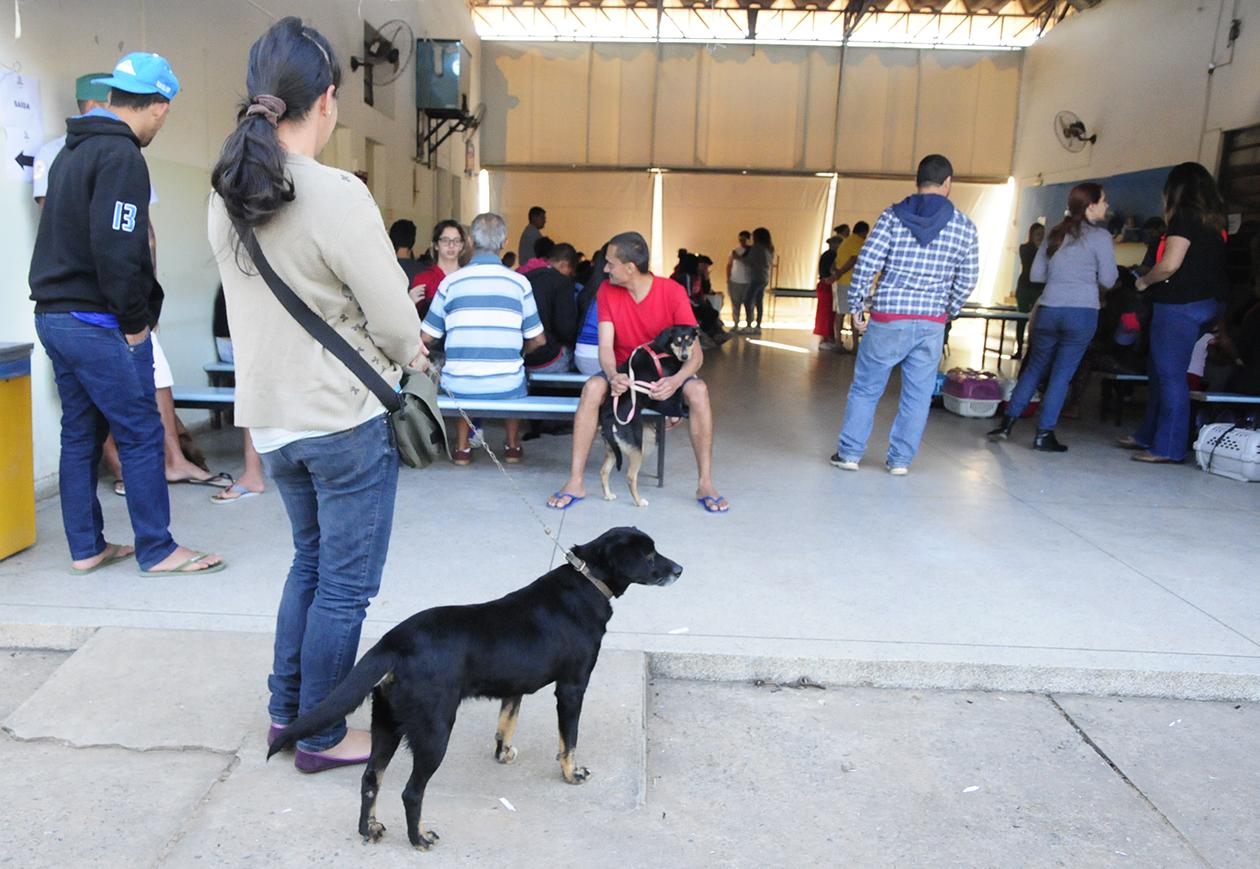 Prefeitura de Jundiaí vai avisar a população quando serão realizados os próximos mutirões de castração