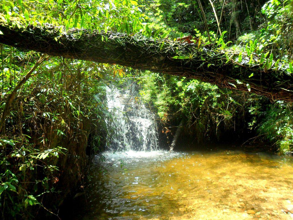 Queda d'água sobre lago, com mata e árvore com limbo caída