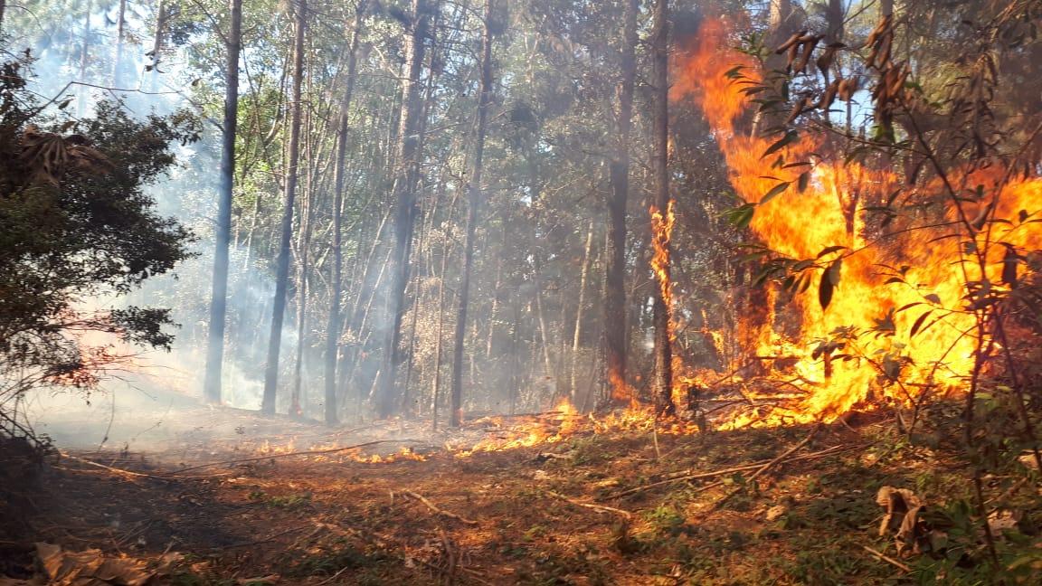 No inverno, estação em que chove menos, aumentam os incêndios na Serra do Japi