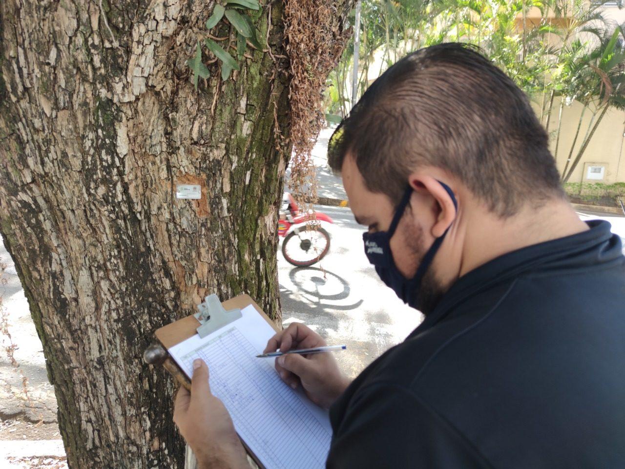 Funcionário de empresa terceirizada da Prefeitura de Jundiaí cataloga árvore que, em breve, passará por avaliação técnica