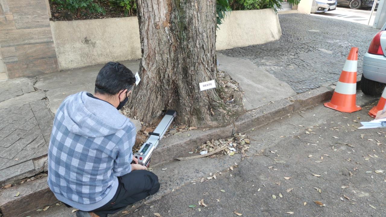 Penetrografia avalia a resistência da madeira e a presença de cavidades no interior da árvore