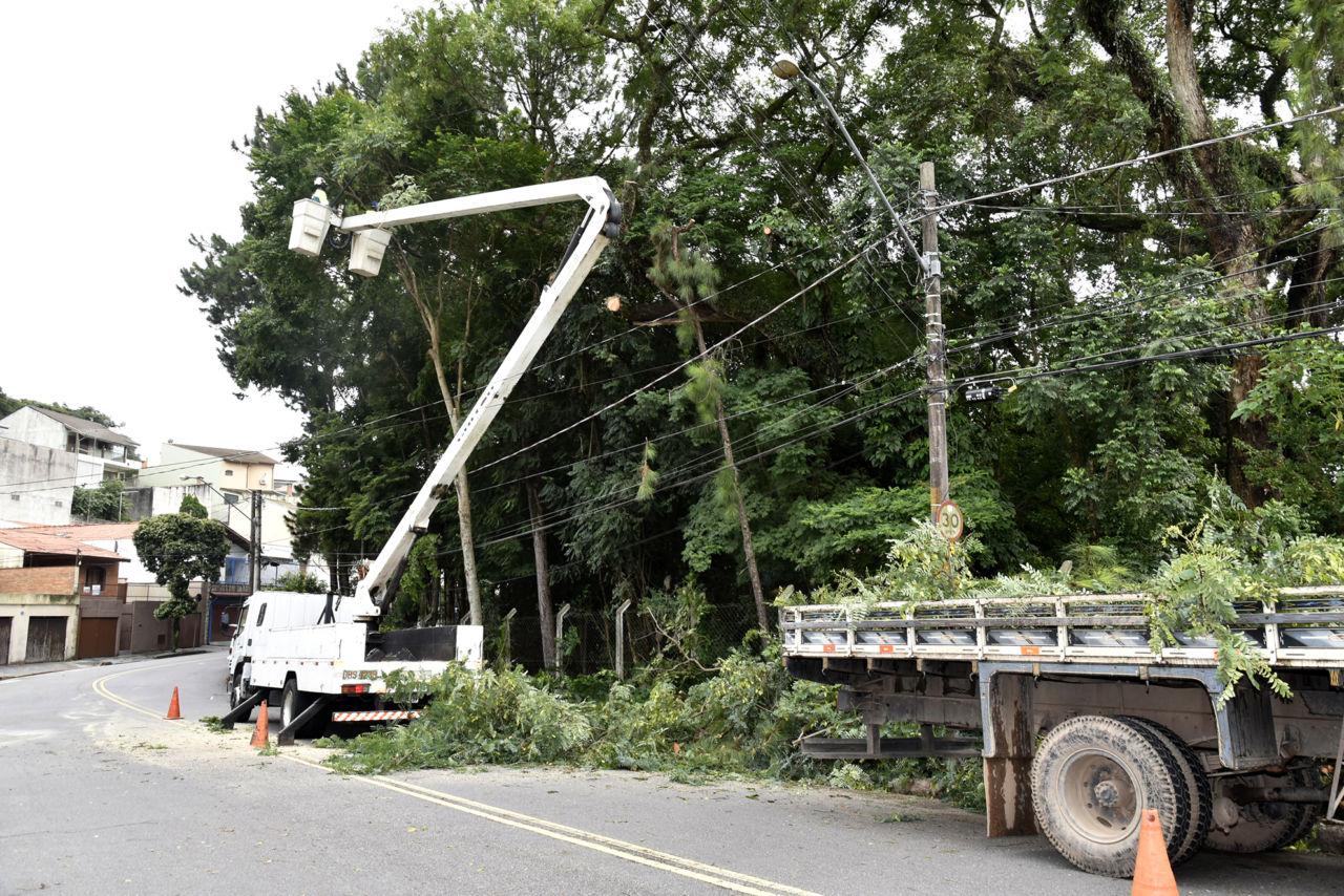 Homens em um guindaste fazem a poda de árvore sobre um caminhão parado em frente ao bosque